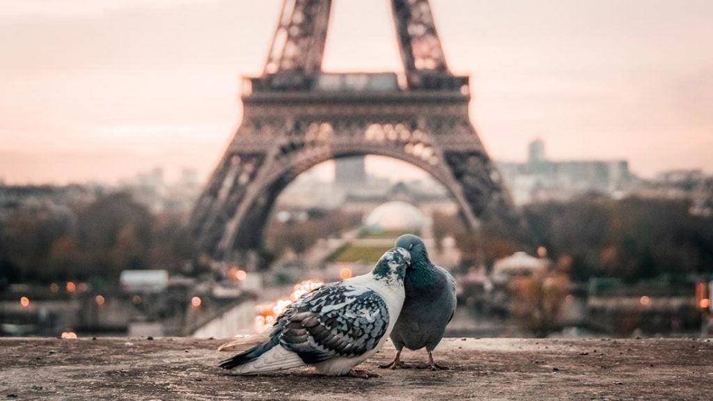 Turtelduer foran Eiffeltårnet i Paris